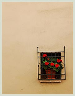 Geranium in a window in Montepulciano